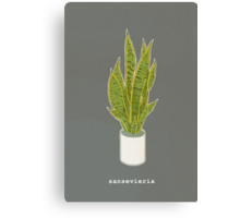 Sansevieria Trifasciata (charcoal gray with text) Canvas Print