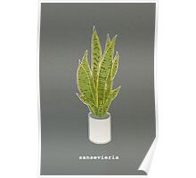 Sansevieria Trifasciata (charcoal gray with text) Poster