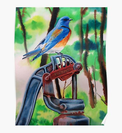 Eastern Bluebird On Rusty Pump Poster