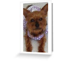 Cute Animals ♡ Princess Yorkie Greeting Card