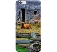 Queen of the Barnyard  iPhone Case/Skin