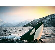 Orca - Tysfjord, Norway Photographic Print