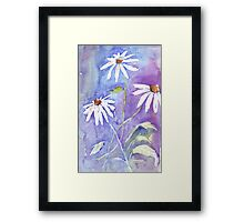 Daisies in my garden Framed Print