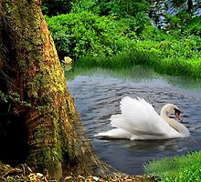 Swan Dance by Barbny
