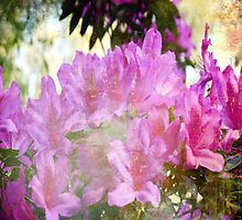 My old hot pink Rhododendron 4 by RGKphotos