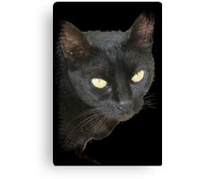 Black Cat Isolated on Black Background Canvas Print