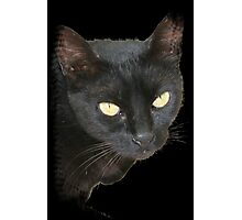 Black Cat Isolated on Black Background Photographic Print