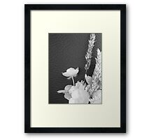 BLACK AND WHITE BUTTERCUP Framed Print
