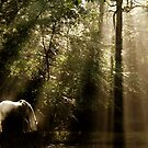 Horse In The Mist - Tranquility 2 by Samantha Higgs