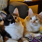 Whisky and Gypsy - Rescued by Myillusions