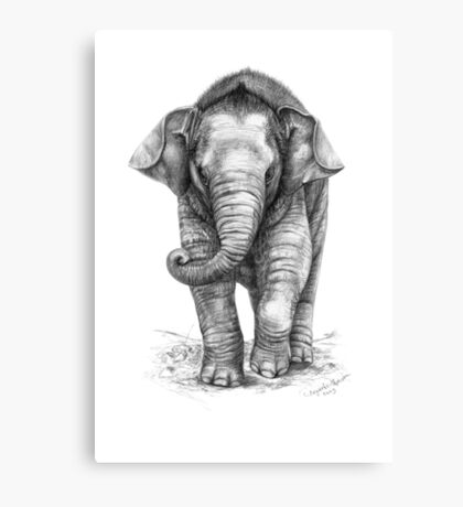 Baby Elephant G046 Canvas Print