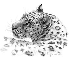 Leopard - Glance Back G004 by schukinart