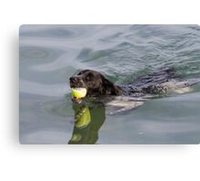 Dog swims with ball in mouth Canvas Print