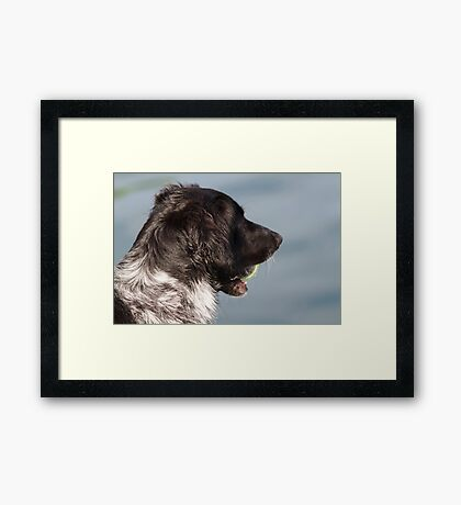 cute dog Framed Print