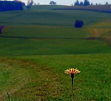 Dandelion with some scenery behind | landscape photography by Patrick Jobst