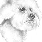 Bichon Frise by BarbBarcikKeith