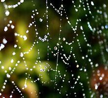 Spider Web Dew by John Marriott