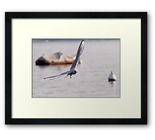 seagull on lake Framed Print
