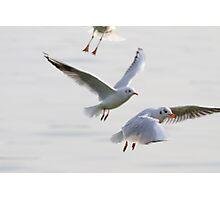 seagull on lake Photographic Print
