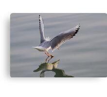 seagull on lake Canvas Print