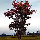 Tree in indian summer style dress | landscape photography by Patrick Jobst