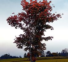 Tree in indian summer style dress   landscape photography by Patrick Jobst