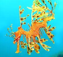 Leafy Seadragon Descending by John Marriott