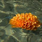 Floating Autumn - Chrysanthemum Blossom in the Fountain by Georgia Mizuleva