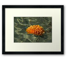 Floating Autumn - Chrysanthemum Blossom in the Fountain Framed Print
