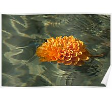 Floating Autumn - Chrysanthemum Blossom in the Fountain Poster