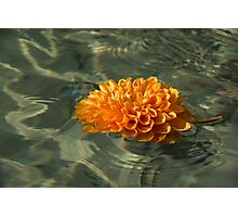 Floating Autumn - Chrysanthemum Blossom in the Fountain Photographic Print