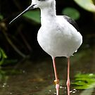 Small Wader by Country  Pursuits