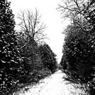 Winter Path by Debbie Oppermann