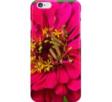 Zinnia flower iPhone Case/Skin