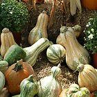 Gourd Collection by WildestArt