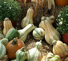 Gourd Collection by WildestArt
