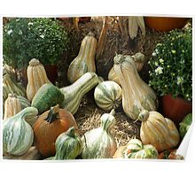 Gourd Collection Poster