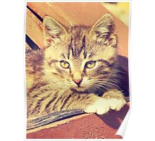Retro Kitten Photo Poster