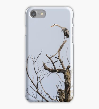 Great Blue Heron 2015-4 iPhone Case/Skin