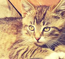 Retro Kitten Photo 2 by AnnArtshock