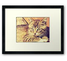 Retro Kitten Photo 2 Framed Print