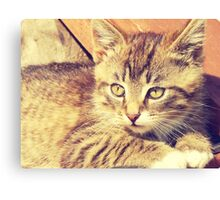 Retro Kitten Photo 2 Canvas Print
