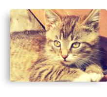 Retro Kitten Photo 2 Canvas Print