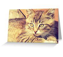 Retro Kitten Photo 2 Greeting Card