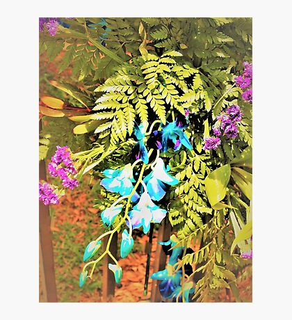 Basket of flowers on a fence Photographic Print