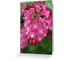 Blackcurrant flowers - 2011 Greeting Card