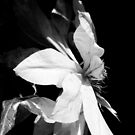 Artic Queen - Clematis 04 - Black and White Photography by PB-SecretGarden