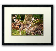 An impressive beautiful animal. Framed Print