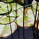 Lily Pad Abstract by Rebecca Cozart