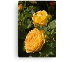 Lovely yellow roses Canvas Print